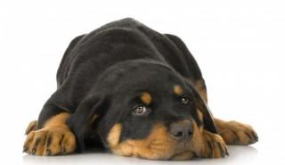 Изберете куче според зодията си