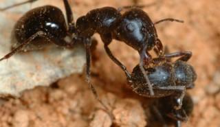 Как да прогоним мравките и хлебарките?