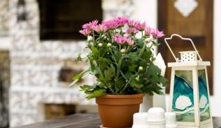 Растения срещу вредното облъчване в дома!